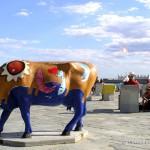 beach-cow