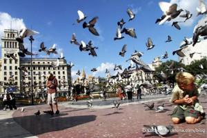 plaza-catalunya-birds